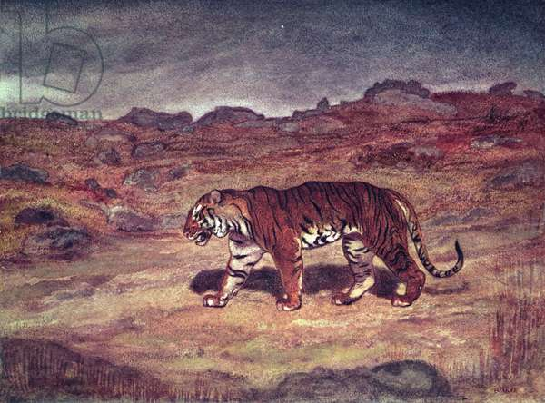 A Tiger Hunting his Prey (w/c on paper)