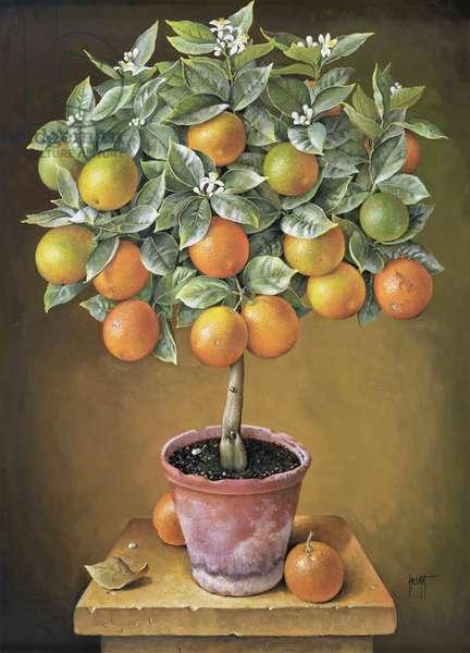 Orange Tree, 1990 (gouache on paper)