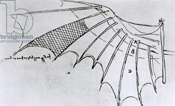 M S B 2173 fol. 74r Studies of wing articulation, 1487-90 (pen & ink on paper)