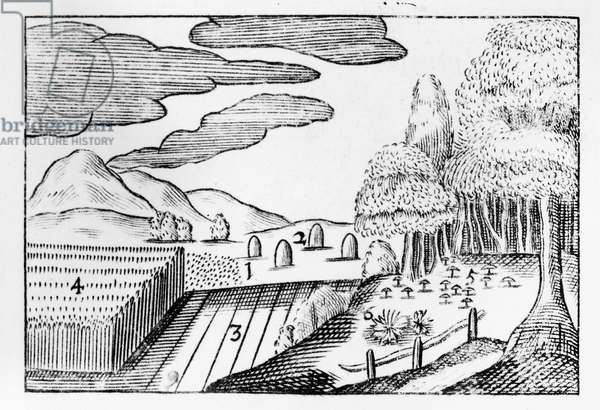 Fruits of the Earth, 1658 (woodcut)
