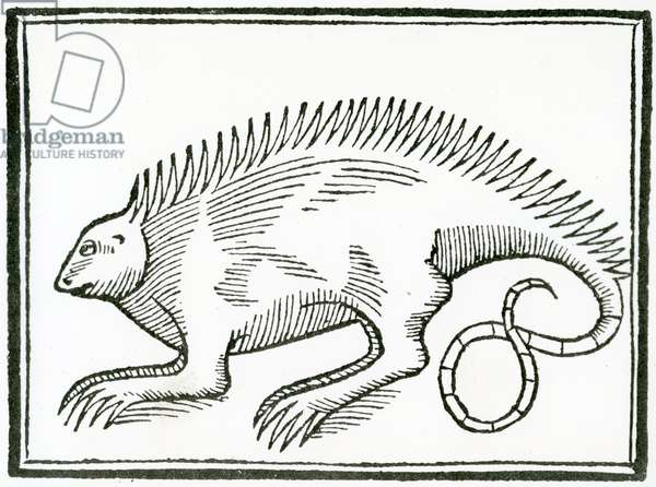 A Reptile found in the New World, from 'La historia general de las Indias', 1547 (woodcut)