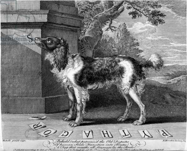 The New Chien Savant, or Learned Dog, print made by F-Morellon la Cave, 1752 (engraving)