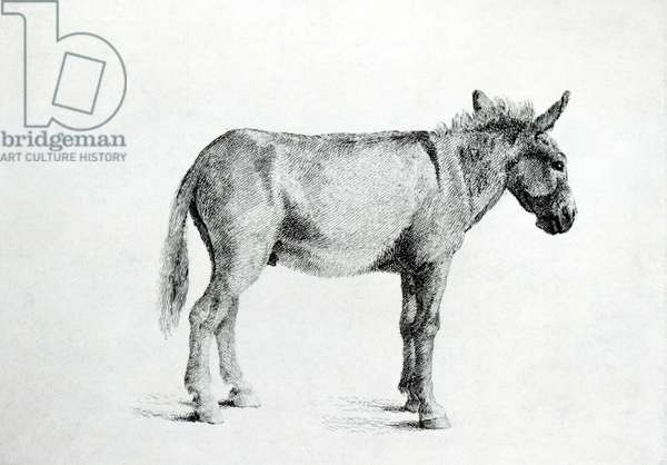 Donkey 1766 (pen and ink on paper) (b/w photo)