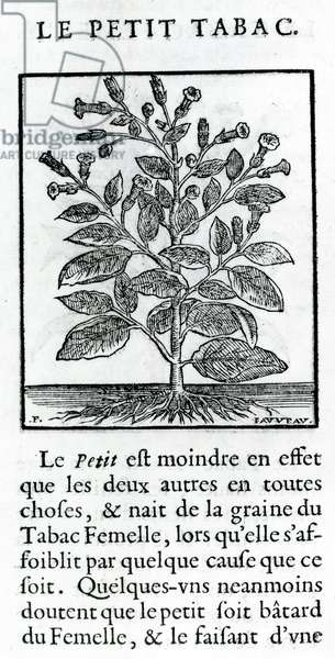 """le Perit Tabac, Illustration from """"Discours du Tabac"""" by Jean Le Royer de Prade, 1671 (engraving)"""