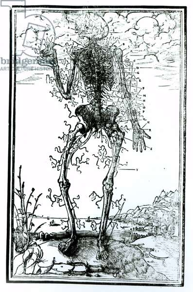 Vascular System of the Body (engraving) (b/w photo)