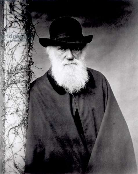 Portrait of Charles Darwin, 1881 (b/w photo)