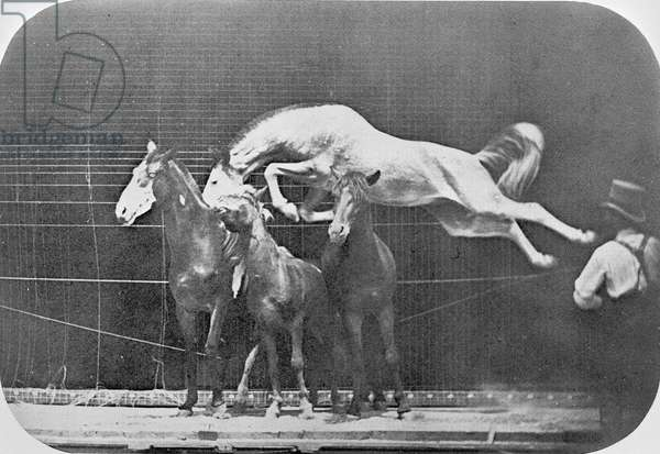Jumping over three horses...chestnut horse Hornet, from 'Animal Locomotion, An Electro-Photographic Investigation of Consecutive Phases of Animal Movement', c.1872-85 (b/w photo)
