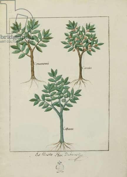 Ms Fr. Fv VI #1 fol.169v Illustration from the 'Book of Simple Medicines' by Mattheaus Platearius (d.c.1161) c.1470 (vellum)