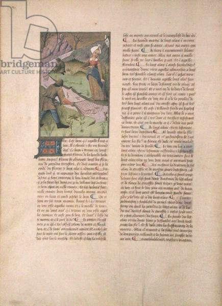 Ms Fr. Fv VI #1 fol. 5v Fishing, illustration from 'The Book of Simple Medicines' by Matthaeus Platerius (d.c.1161) c.1470 (vellum)