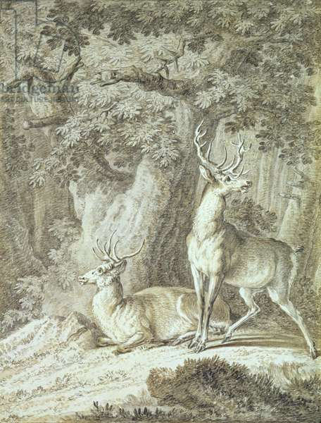 Two Stags (crayon on paper)