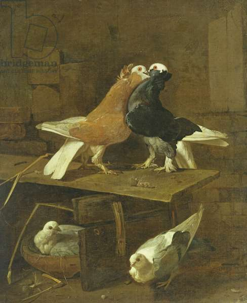 Pigeons (oil on canvas)