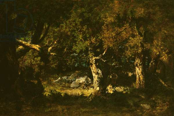 Woodland Thicket (oil on canvas)