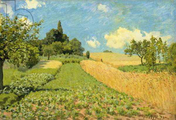 The Cornfield (near Argenteuil) (oil on canvas)