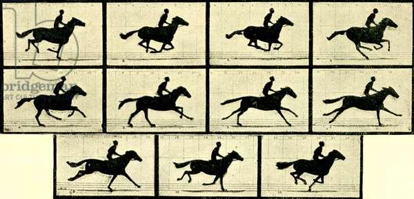 Eadweard Muybridge - Stills from the Horse in Motion