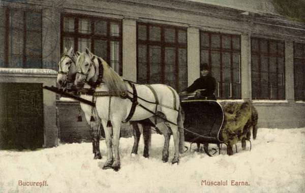 Bucharest - Horses wearing