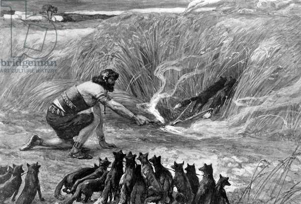 Samson and the foxes by J James Tissot - Bible