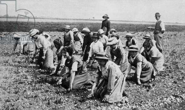 Land girls, WW1