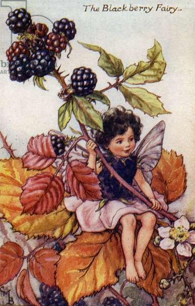 The Blackberry Fairy