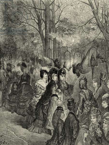 The parrot walk at a Victorian London zoo