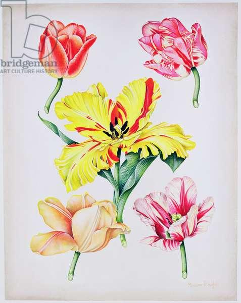 5 Tulips, 1990 (w/c on paper)
