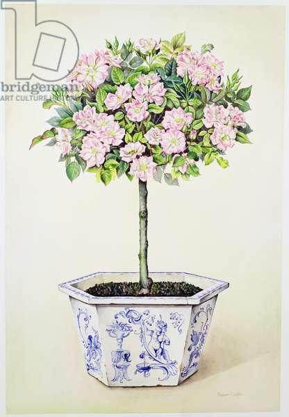 Tudor Rose Tree in Clay Pot, 1990 (w/c on paper)
