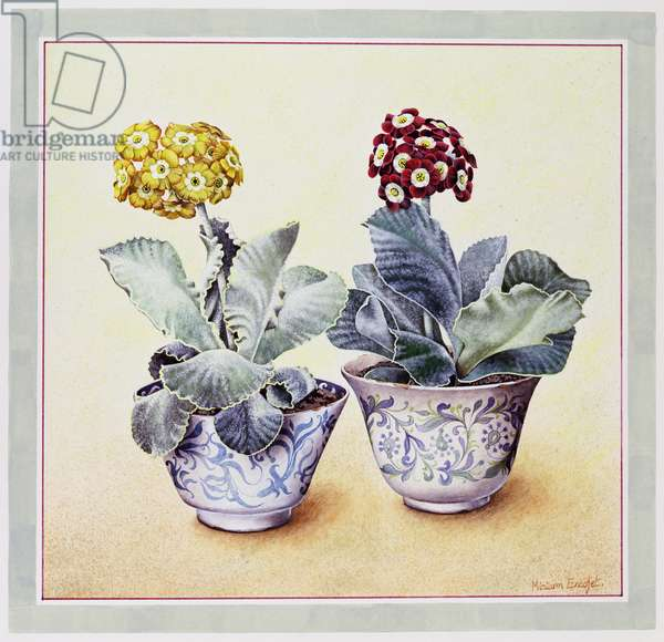 Yellow and Red Auriculas in Blue and White Pots, 1990 (w/c on paper)