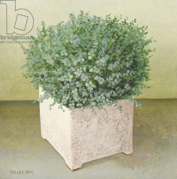 Helxine in Square Pot, 1999 (acrylic on board)