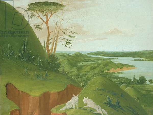 River Bluffs with White Wolves in the Foreground, Upper Missouri, 1832 (oil on canvas)