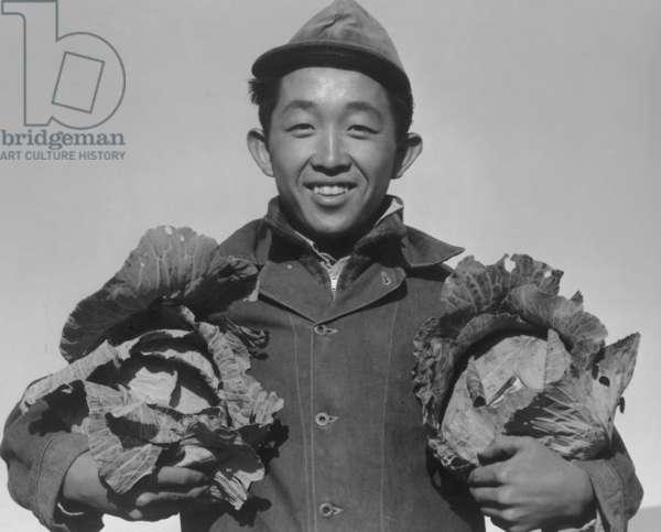 Richard Kobayashi, farmer with cabbages at Manzanar, 1943 ( b/w photo)