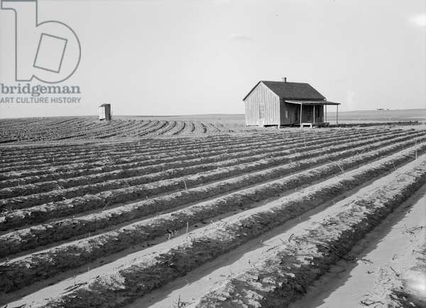 Abandoned tenant house seen across tractored fields, Hall County, Texas, 1938 (b/w photo)