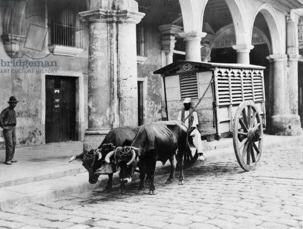 Meat wagon in Havana, c.1903 (b/w photo)