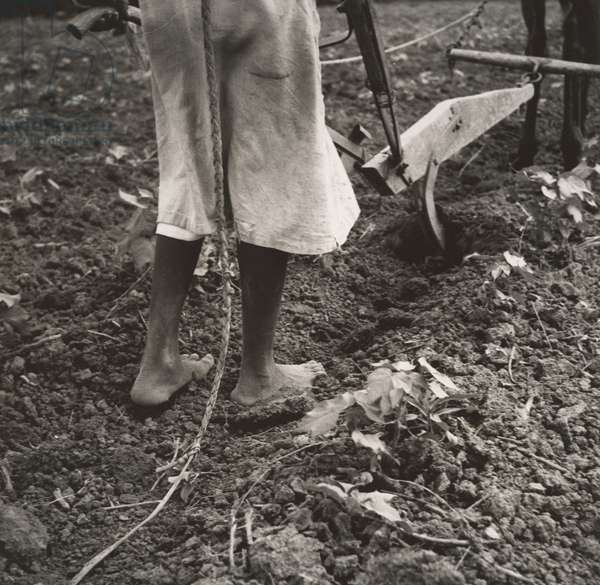 Alabama Plow Girl, near Eutaw, Alabama, 1936 (gelatin silver print)