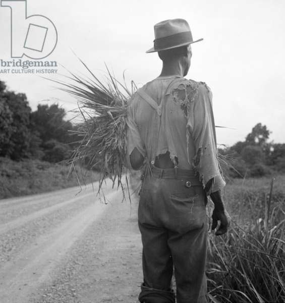 African-American on cotton patch in Mississippi, 1936 (b/w photo)