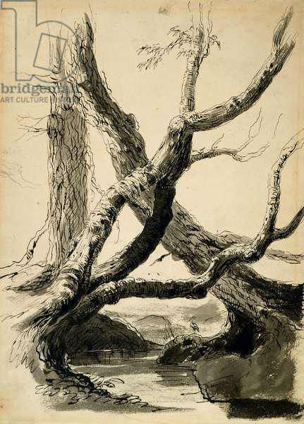 Sketch of Tree Trunks, c.1825-40 (black ink, pen, wash & pencil on white paper)