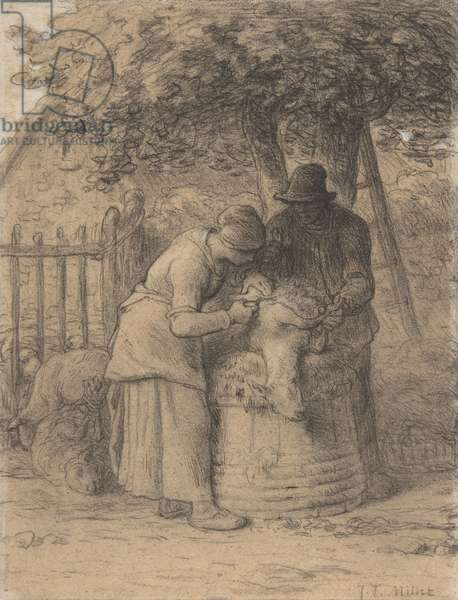 Sheepshearing Beneath a Tree, c.1854 (conté crayon with pen and brown ink and gouache on paper)
