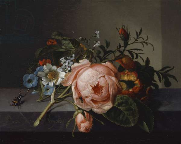 Still Life with Rose Branch, Beetle and Bee, 1741 (oil on canvas mounted on oak)