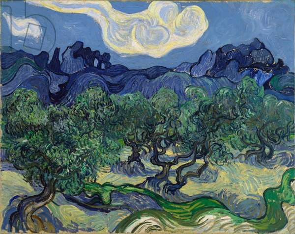 The Olive Trees, 1889 (oil on canvas)