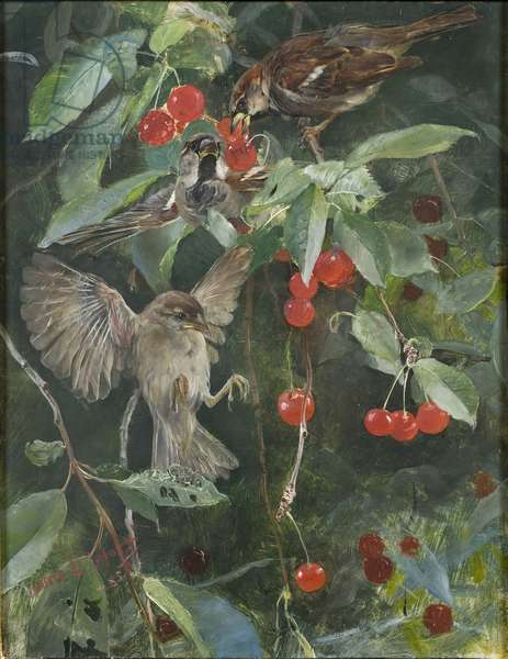 Sparrows in a Cherry Tree, 1885 (oil on panel)