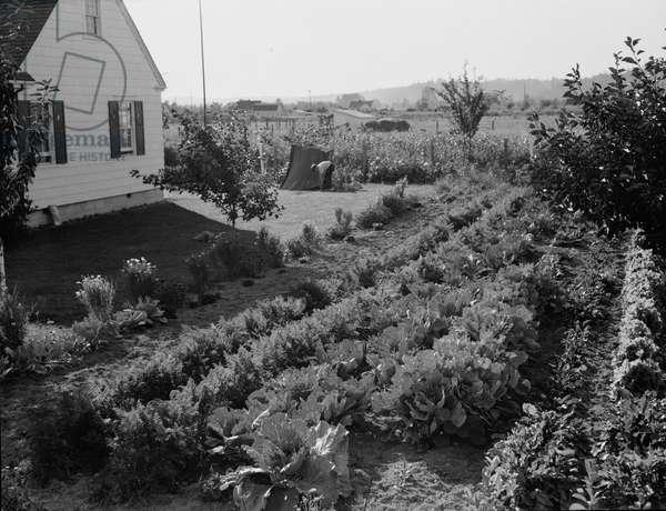 Longview homestead project, 1939 (b/w photo)