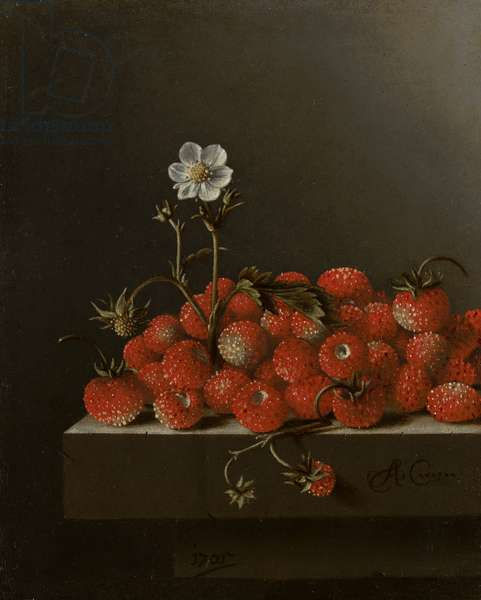 Still Life with Wild Strawberries, 1705 (oil on paper on panel)