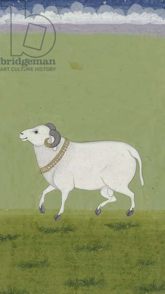 Ram with golden collar, 1700-99 (w/c on paper)