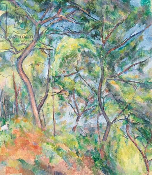Sous-Bois, c.1894 (oil on canvas)