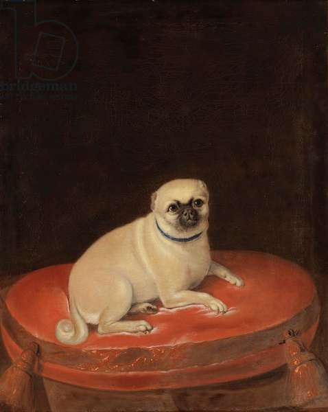 Pug (oil on canvas)