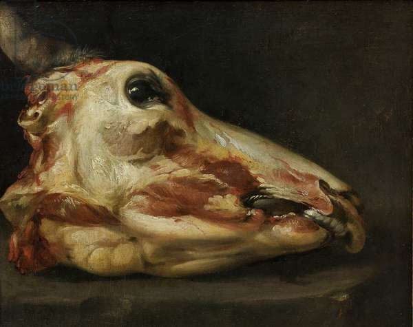 Skinned Head of a Young Bull, c.1690 (oil on canvas)