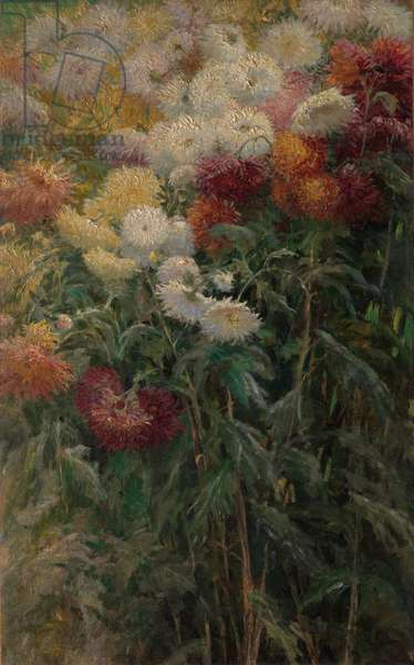 Chrysanthemums in the Garden at Petit-Gennevilliers, 1893 (oil on canvas)