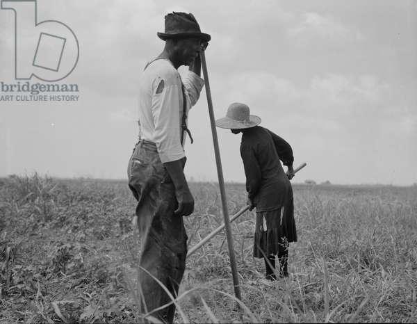 Cotton sharecroppers Georgia, 1937 (b/w photo)