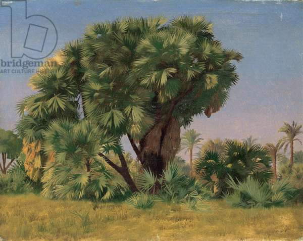 Study of Palm Trees, 1868 (oil on canvas)