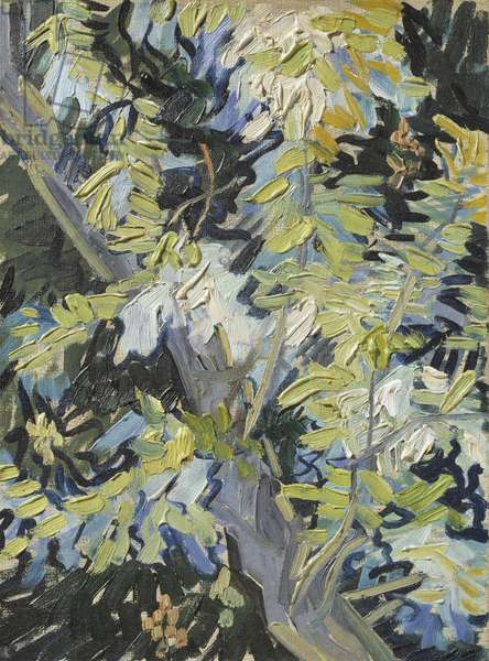 Acacia in Flower, c.1889 (oil on canvas)