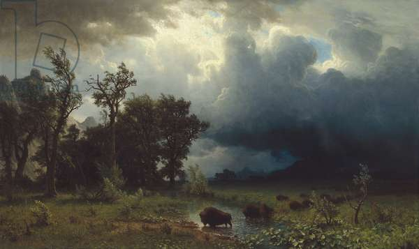 Buffalo Trail: The Impending Storm, 1869 (oil on canvas)