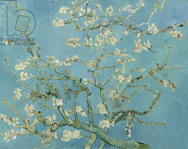 Almond Blossom, 1890 (oil on canvas)